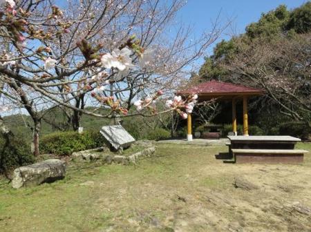 女山竹屋の桜 143