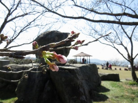 女山竹屋の桜 125