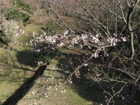 女山竹屋の桜 032