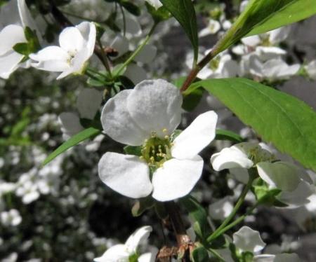 女山竹屋の桜 213