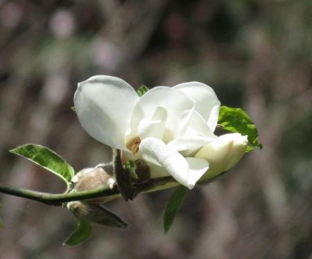 女山竹屋の桜 179