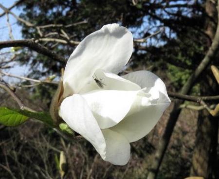 女山竹屋の桜 103