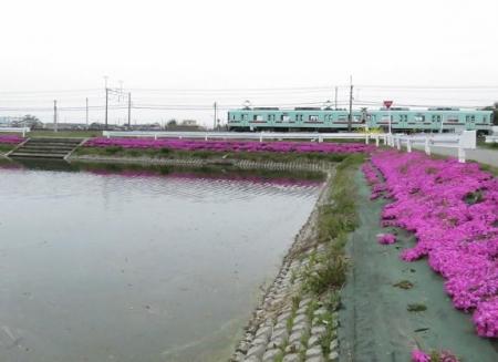 桜花宗川 094