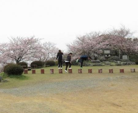 桜満開 178
