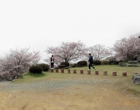桜満開 175