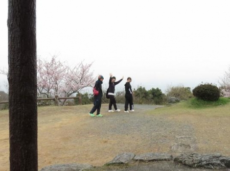 桜満開 182