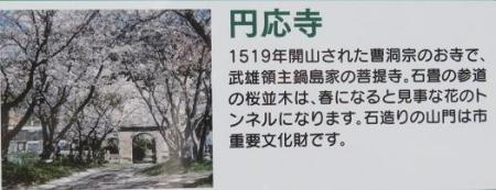 一本桜 107