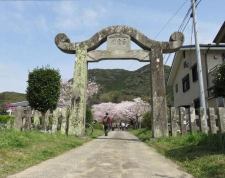 一本桜 111