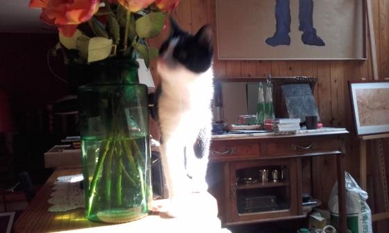 猫のリュリュ