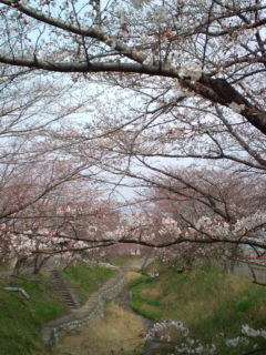 3月30日の桜