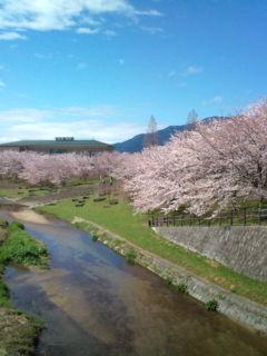 4月2日の桜1