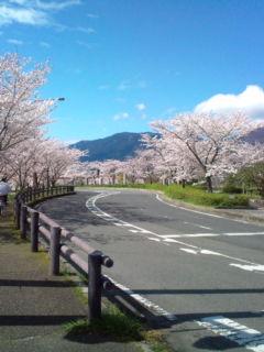 4月2日の桜3
