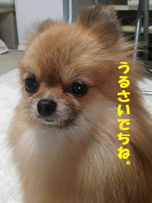 DSC_00333.jpg