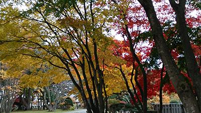 秋イメージ1