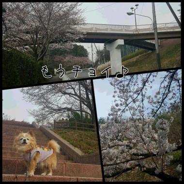 PhotoGrid_1459399176560.jpg