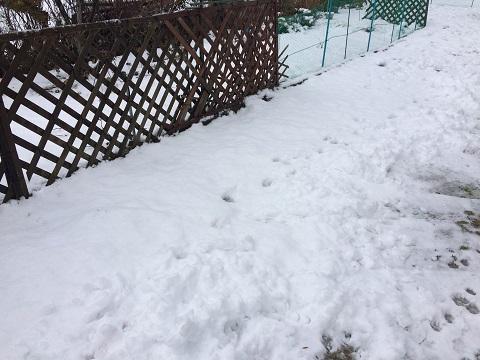 12月初雪