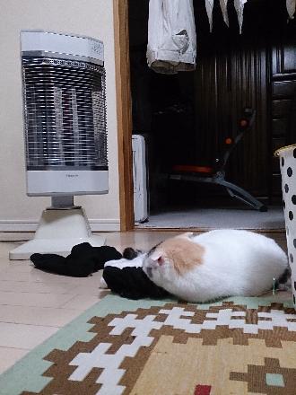 猫1603180009(1)