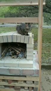 石釜にうちの猫20151029