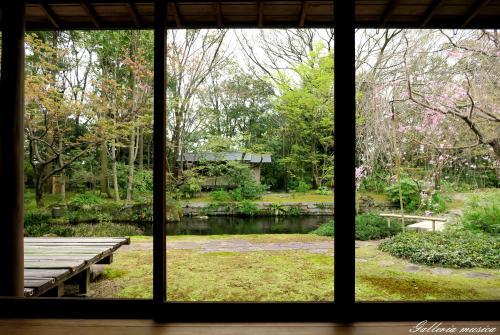 日本の春の美