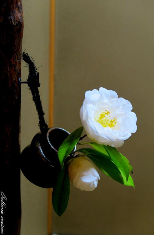 日本の春の美2