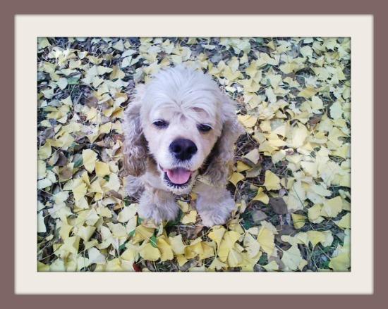 落ち葉のじゅうんたん