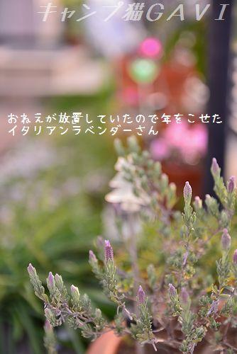 1604_3022.jpg