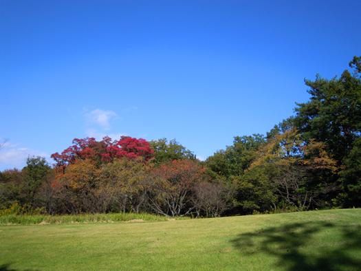 愛知県森林公園の紅葉写真1。