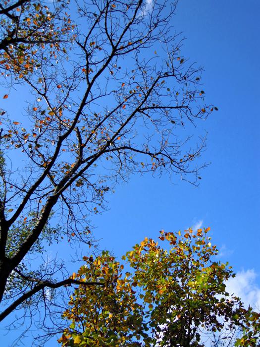 愛知県森林公園の紅葉写真2。