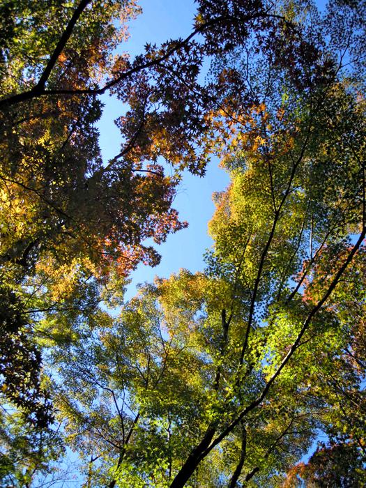 名古屋の東山植物園の紅葉1。