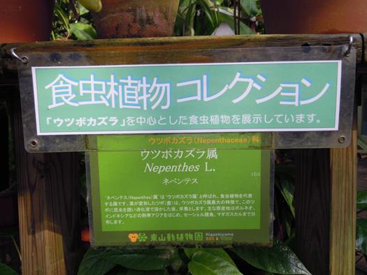 食虫植物コレクション、ウツボカズラ属。