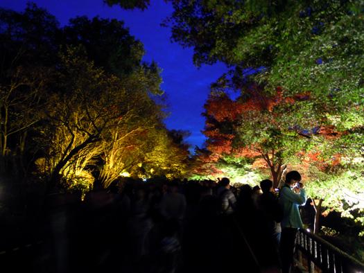 東山動植物園 紅葉ライトアップ1。