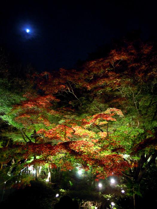 東山動植物園 紅葉ライトアップ2。