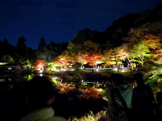 東山動植物園 紅葉ライトアップ3。