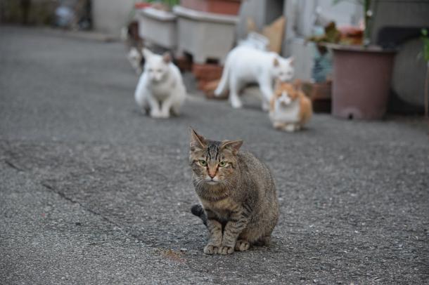 猫16,17,18,19,20