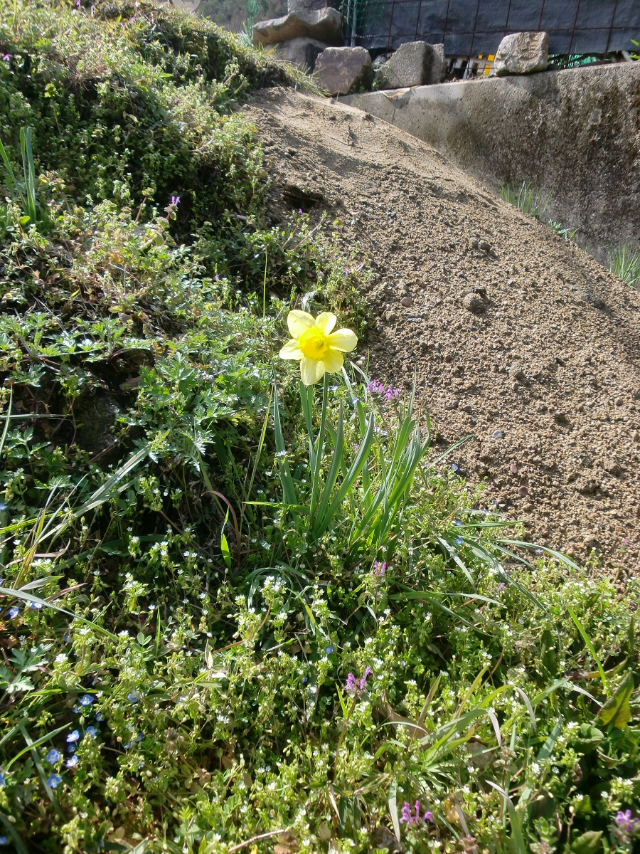 散歩道の草花