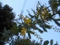 花盛り (1)