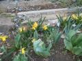 花盛り (3)