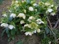 花盛り (4)