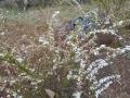 花盛り (6)