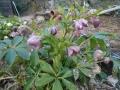 花盛り (8)