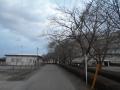 桜はまだ (2)