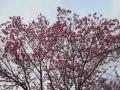 0401開花 (2)