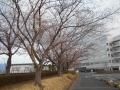 0401開花 (3)