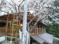 ひつじの桜 (1)
