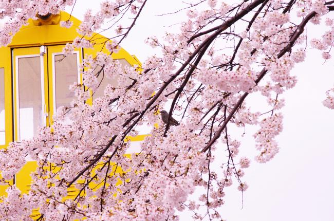 spring+has+come_convert_20160411224452.jpg