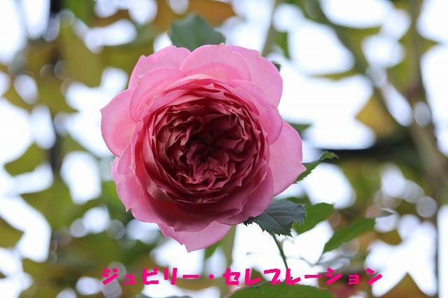 IMG_3282.jpg