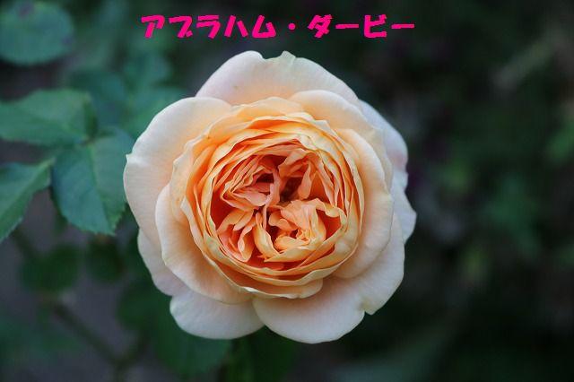 IMG_4157.jpg