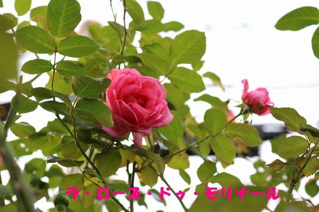 IMG_4168_2015102423012497e.jpg
