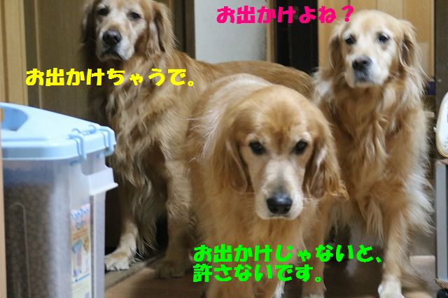 IMG_4426_20151027213727814.jpg