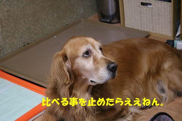 IMG_4646_201510292344513f7.jpg